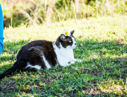 4 Fundraising Lessons I Learned From My Cat