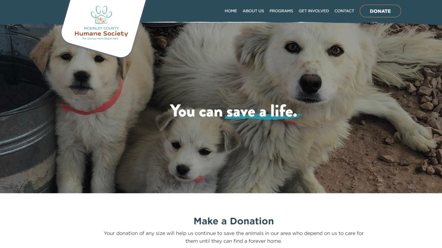 nonprofit website visitor